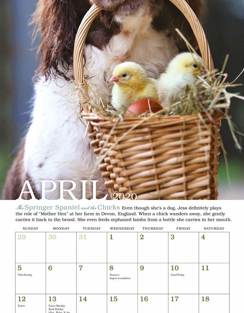 Workman Publishing Group Unlikely Friendships Mini Wall Calendar 2020