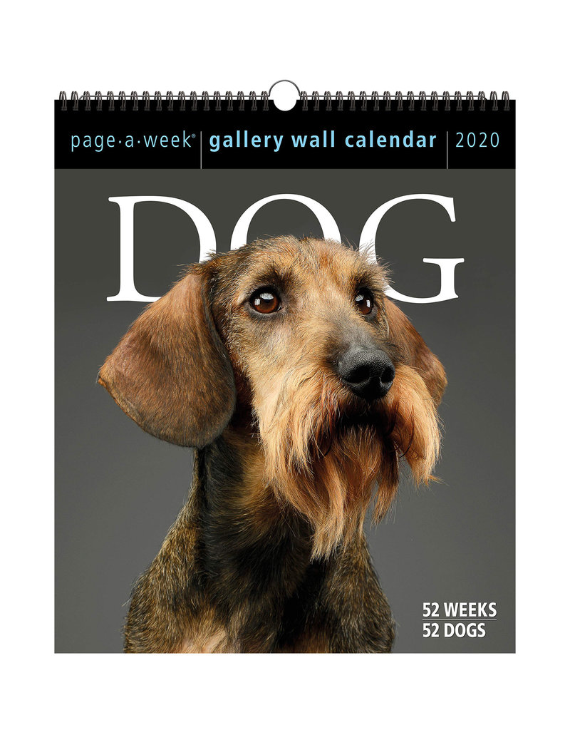 Workman Publishing Group Dogs Peek-A-Week Wall Calendar 2020