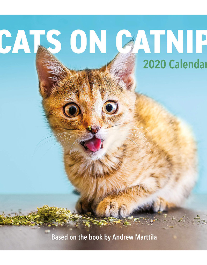 Workman Publishing Group Cats on Catnip Wall Calendar 2020