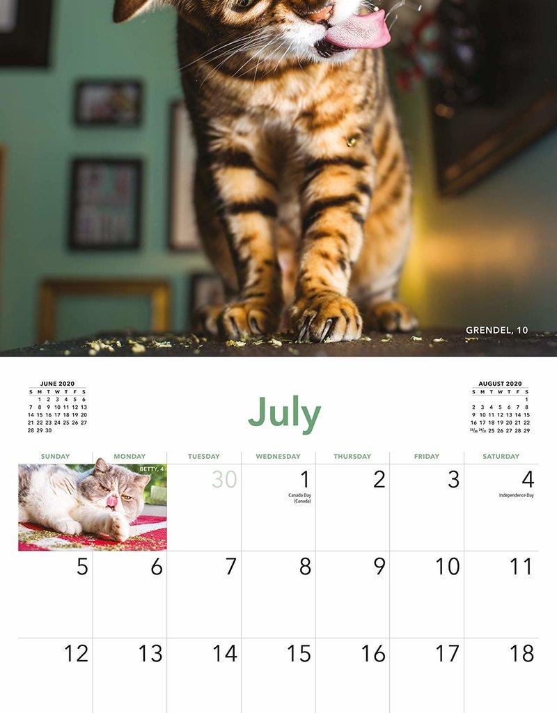 Workman Publishing Group Cats on Catnip Wall Calendar 2020