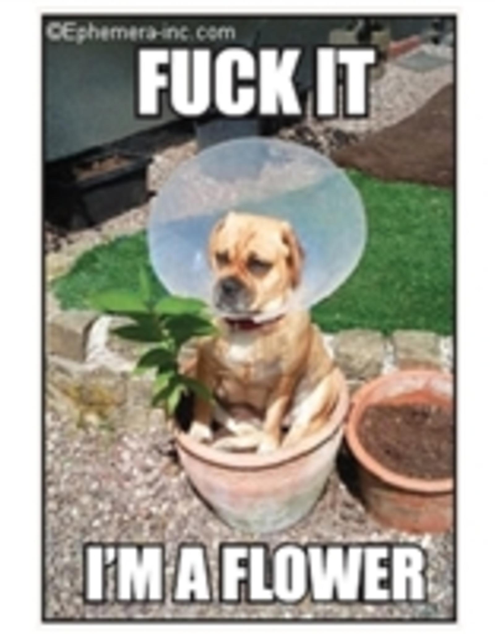 Fuck it, I'm a Flower Dog Magnet
