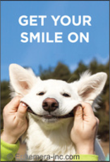 Ephemera, Inc Get Your Smile On Magnet