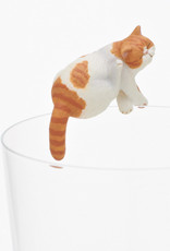 Exotic Shorthair Blind Box