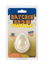 Toysmith Hatchin' Grow Turtle