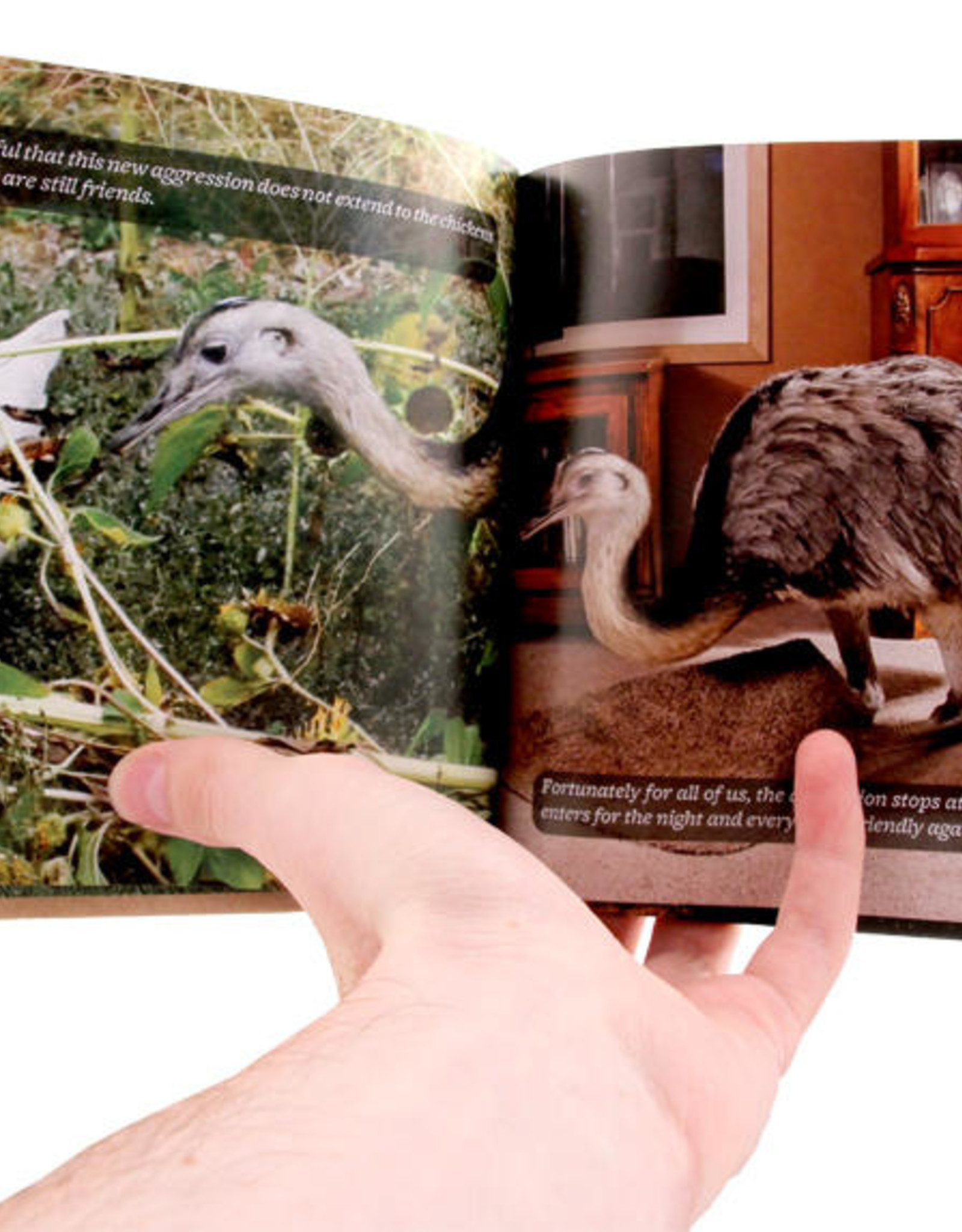 Microcosm Publishing Amica's World - How A Giant Bird Came Into Our Heart and Home