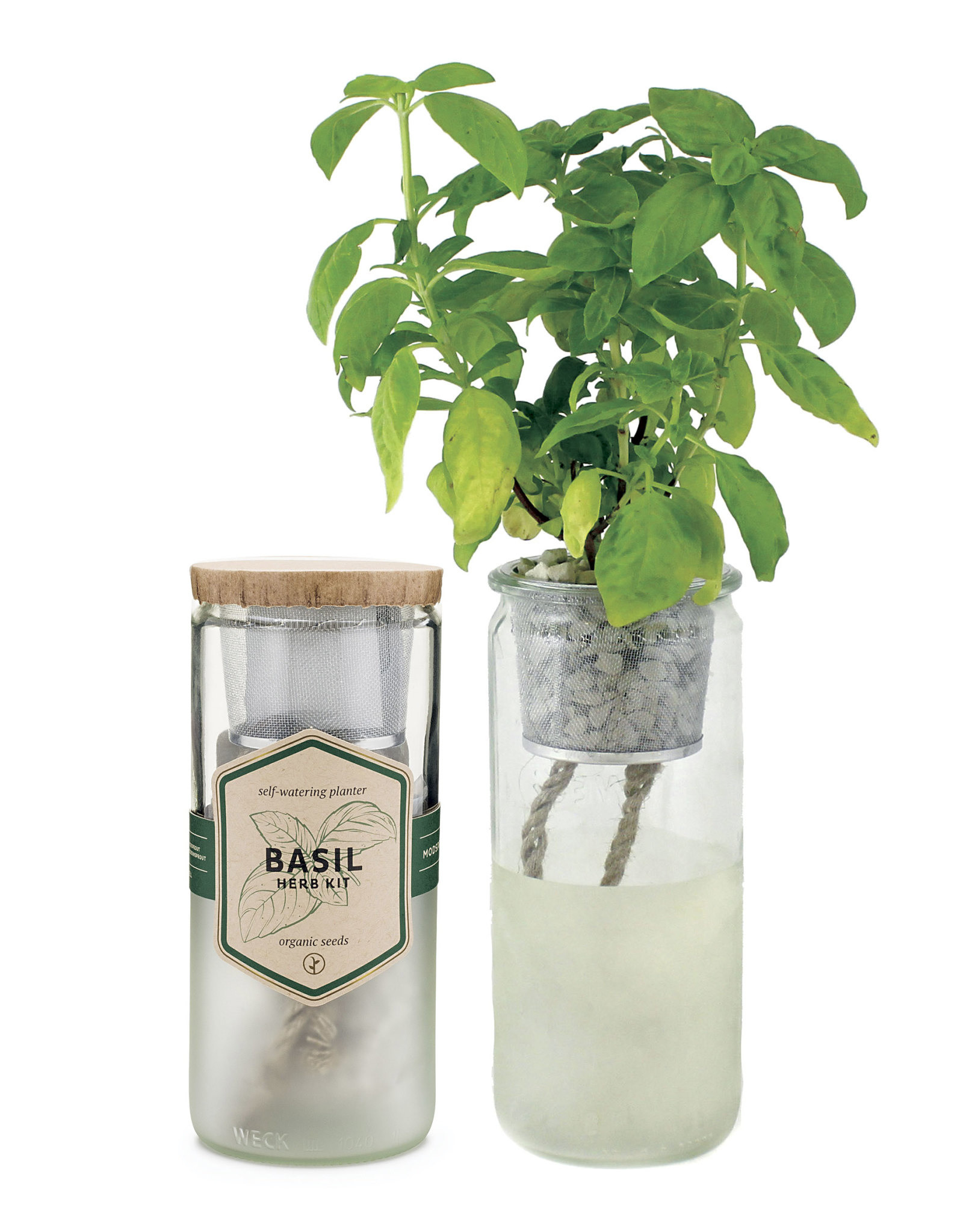 Eco Planter - Basil