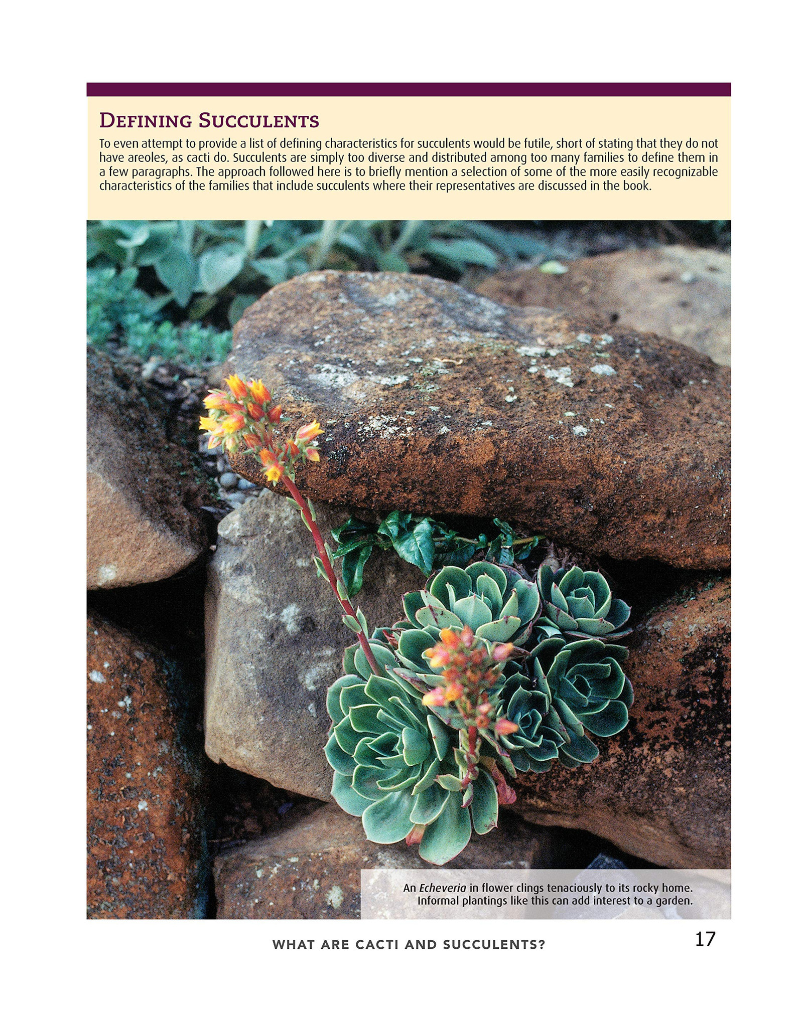 Cacti and Succulents Handbook