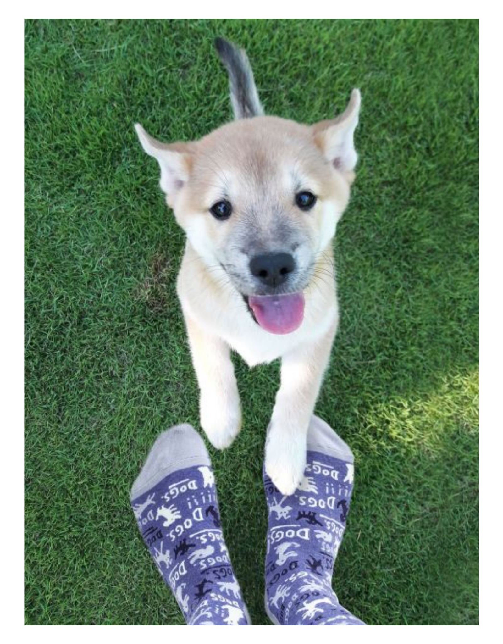 Dogs! Women's Crew Socks