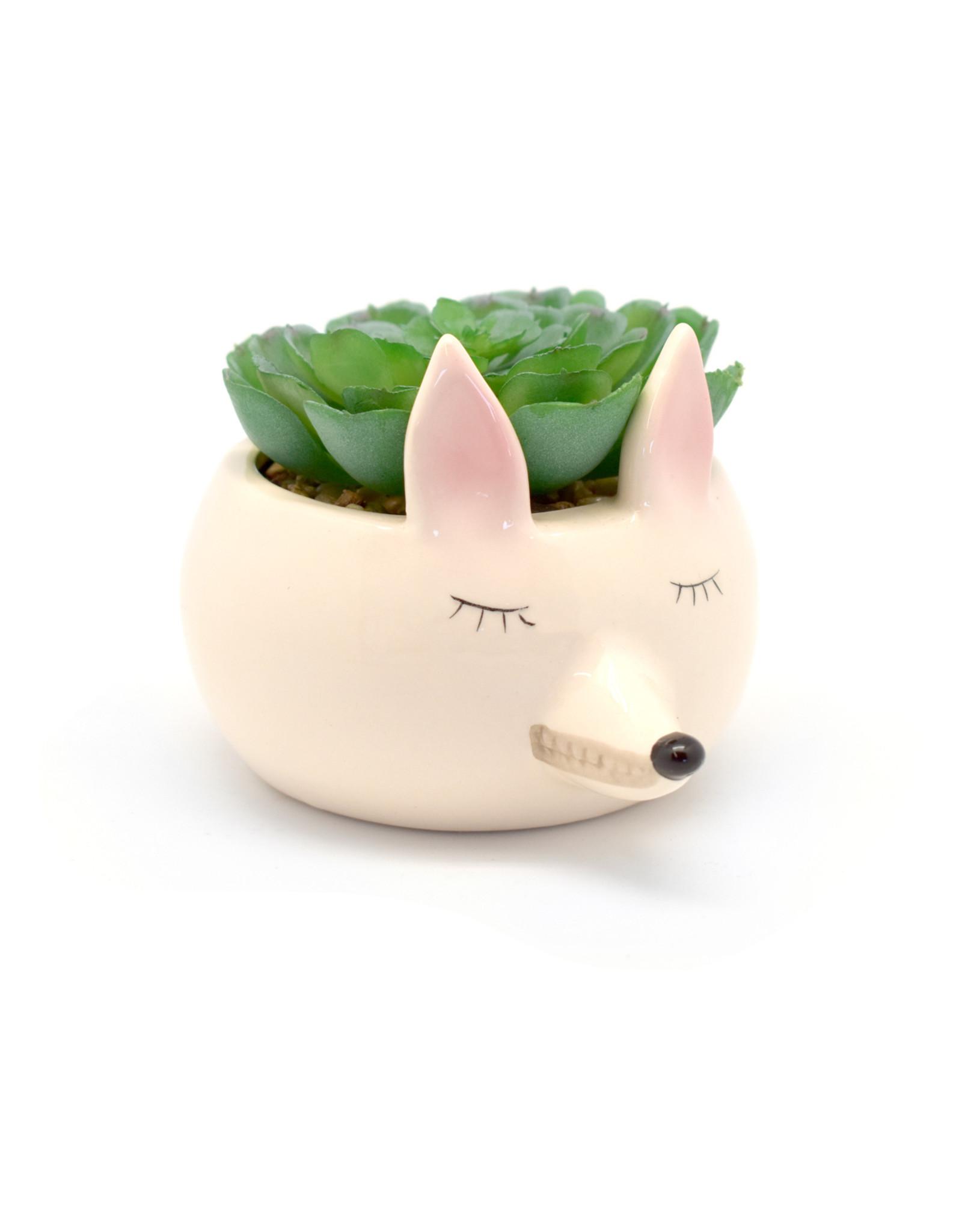 Succulent in Ceramic Fox Pot