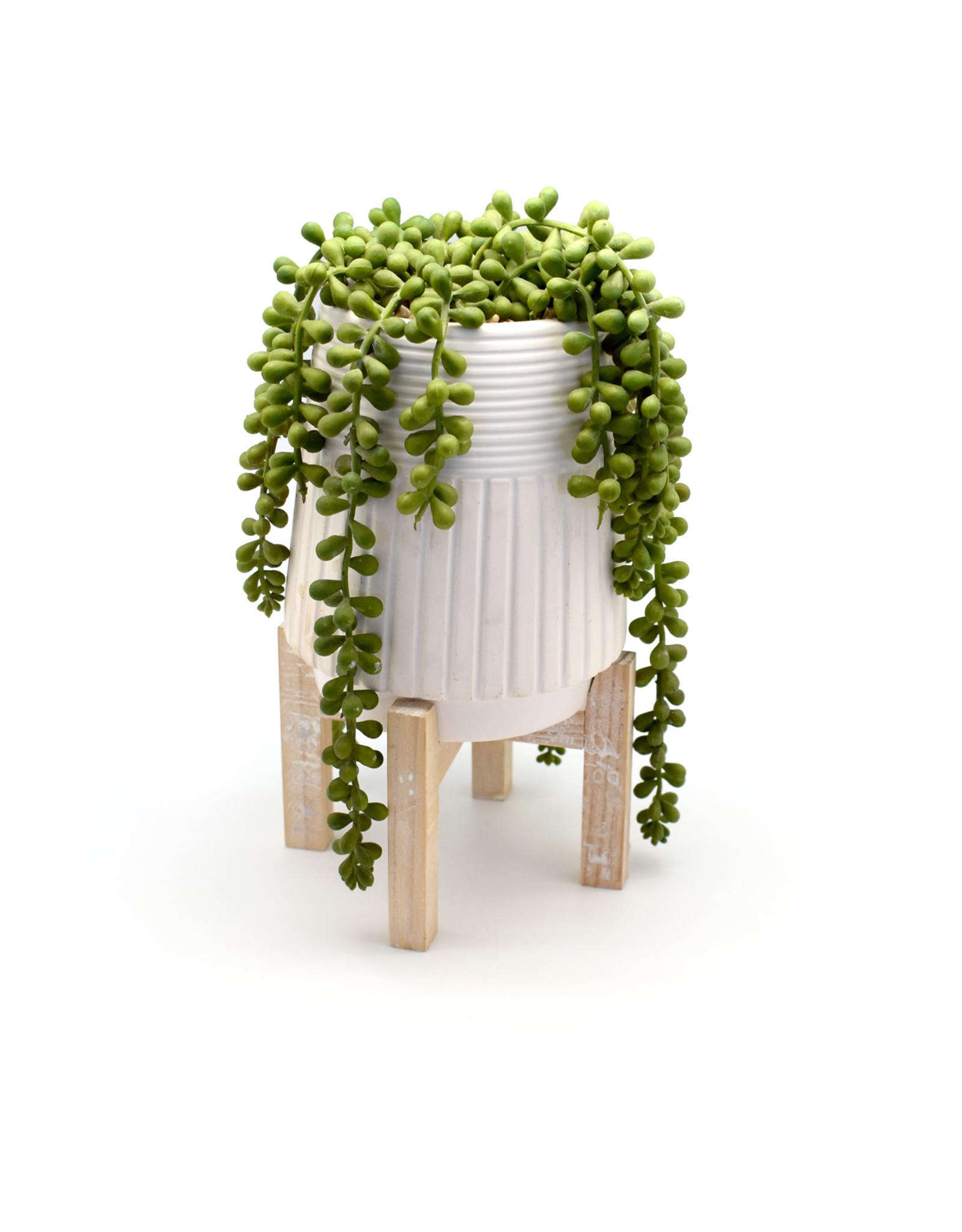 Donkey Tail in Ceramic Pot w/ Wood Stand