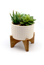 Succuelent Mix in White Patterned Pot w/ Stand