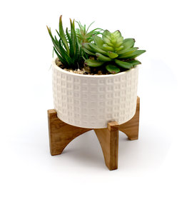 Succulent Mix in White Patterned Pot w/ Stand