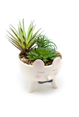 Succulent in Large Mouse in a Bow Tie Ceramic Planter