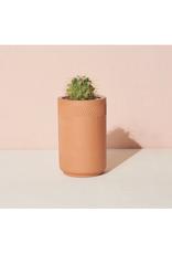 Terra Cotta Kit - Cactus