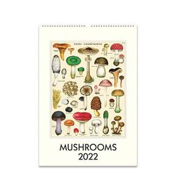 2022 Wall Calendar : Mushrooms