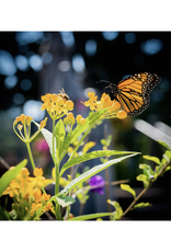 Pollinator's Delight Flower Seed Grow Kit
