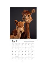 I Love Alpacas 2022 Wall Calendar