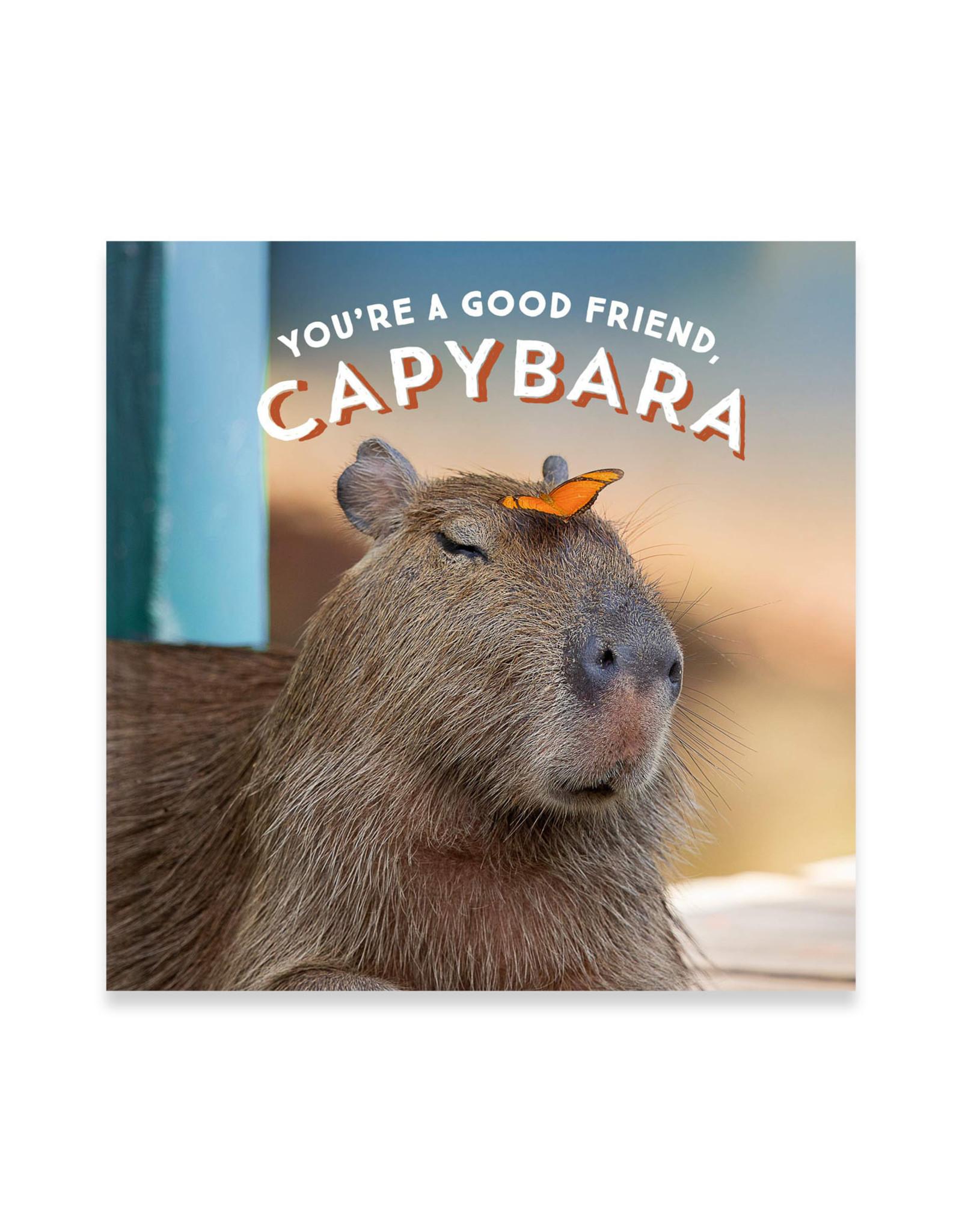 You're a Good Friend, Capybara