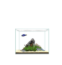 Waterbox Aquariums Waterbox Aquariums Clear 6