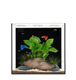 Waterbox Aquariums Cube 10