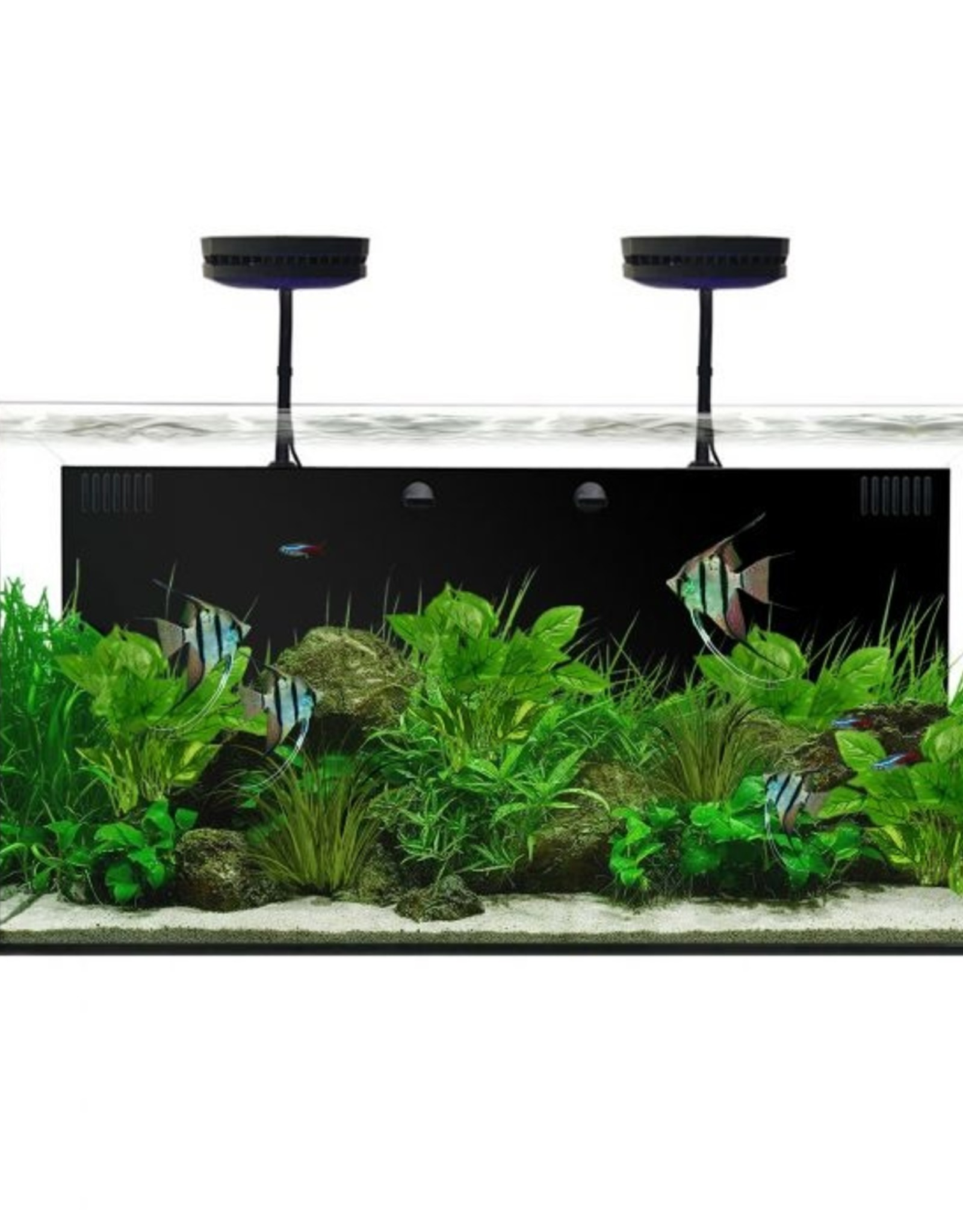 Waterbox Aquariums Waterbox Aquarium, 50.3 All-in-one Freshwater Plus