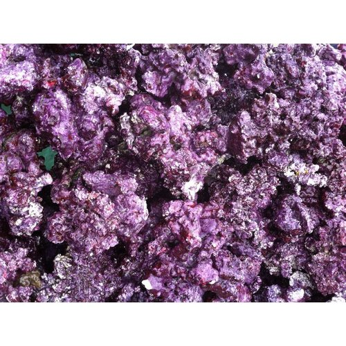 REAL REEF Live Rock - Mixed Sizes - (price/lb.)