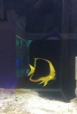 SW-FISH