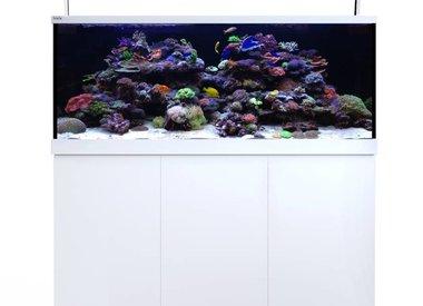 Full Size Aquariums
