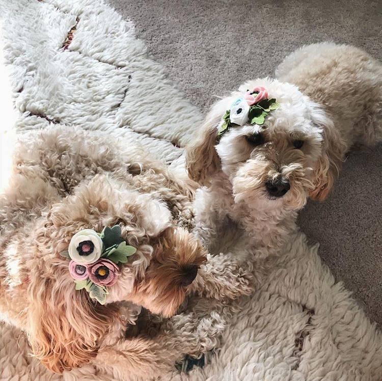 Kiki & Bee Petite poppy headband