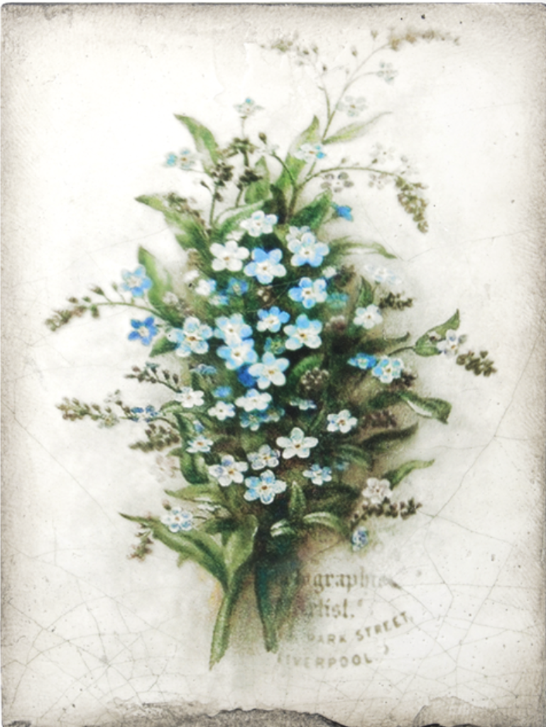 Sid Dickens Forget Me Not