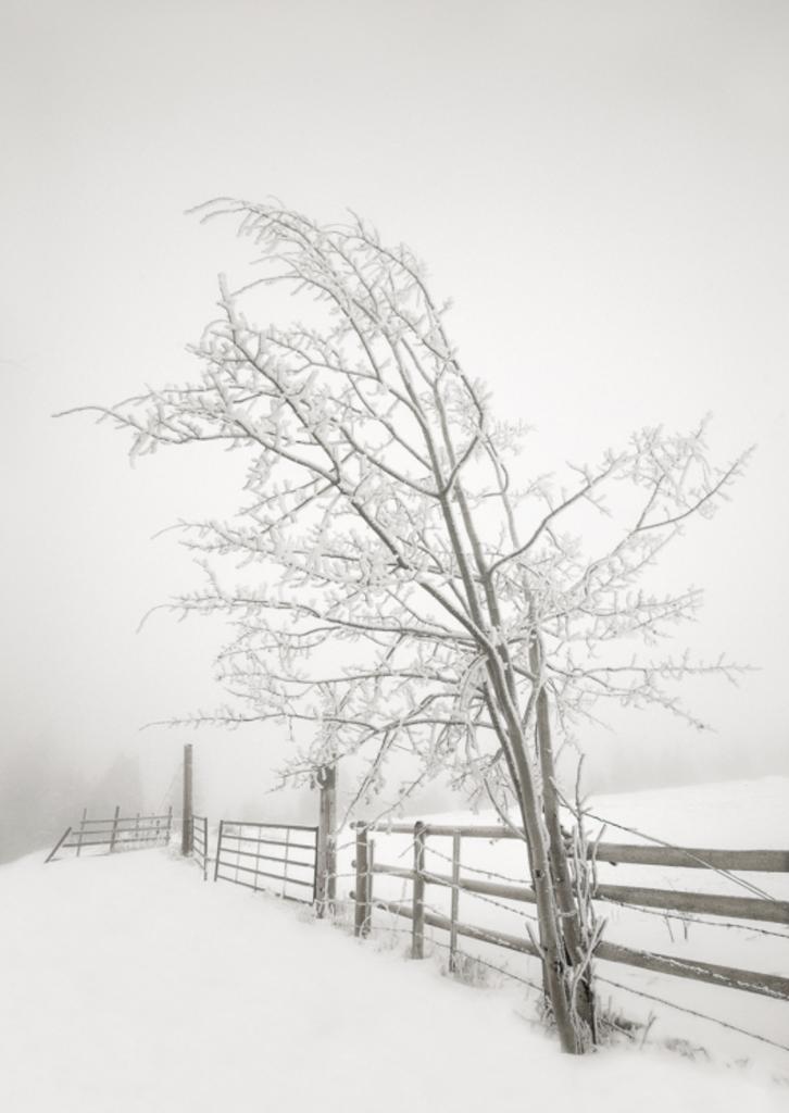 Rob Stenner Frozen Fenceline