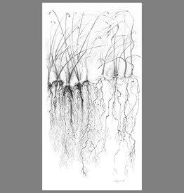 """Troy Corliss Tall Grass, Print- 65"""" X 38"""" (unframed)"""