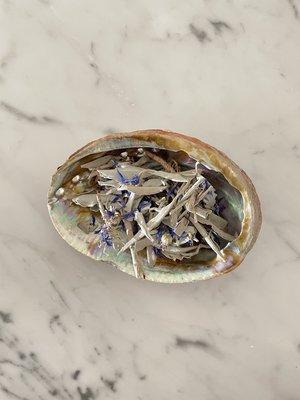"""Abalone Shell 4"""""""