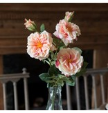 Park Hill Gathered Garden Roses Peach HY1231P