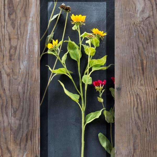 Crafted Wild Sunflower Stem XG5288
