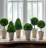 Park Hill Boxwood Topiary