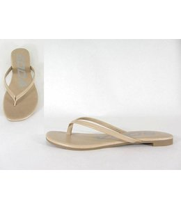 Shoe Shi Seashell