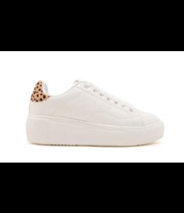 QP Maxmino-01 Cheetah