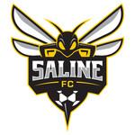 SALINE HORNET DECAL