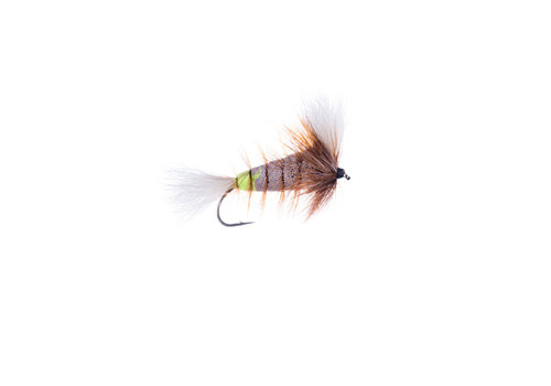 Gray-White Tail-Brown Hackle w. Fl. Green Butt (Wulff Bomber)