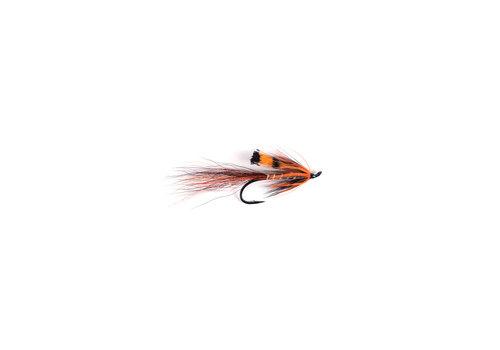 Ally's Copper Shrimp