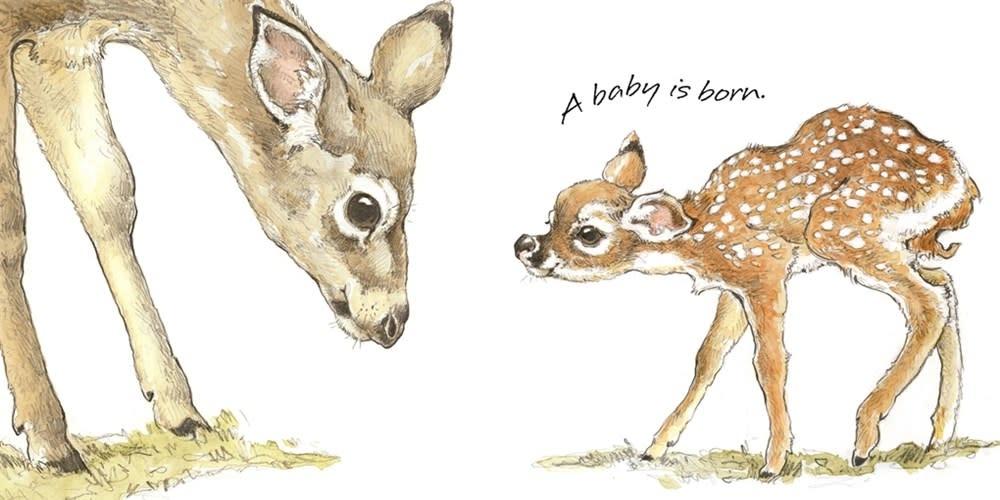 Roaring Brook Press Born in the Wild