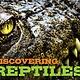 Applesauce Press Discovering Reptiles Handbook