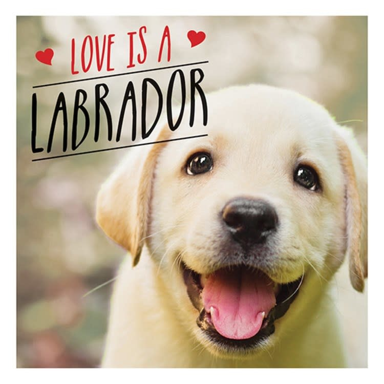 Summersdale Love Is A Labrador: ..the World's Favorite Dog