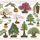 Abrams Books for Young Readers Trees