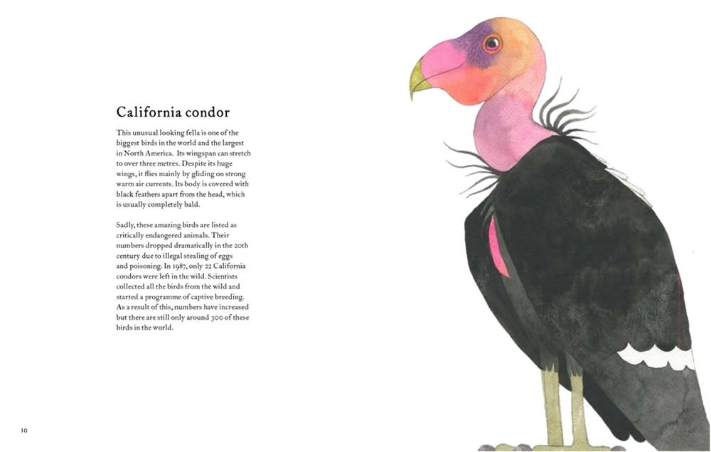Princeton Architectural Press The Atlas of Amazing Birds