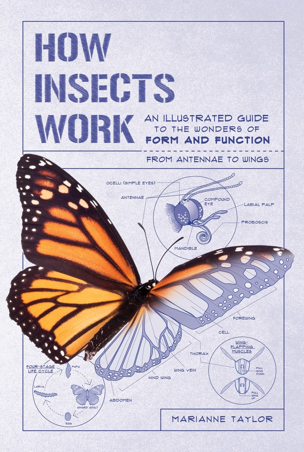The Experiment How Insects Work: ...Form and Function from Antennae to Wings