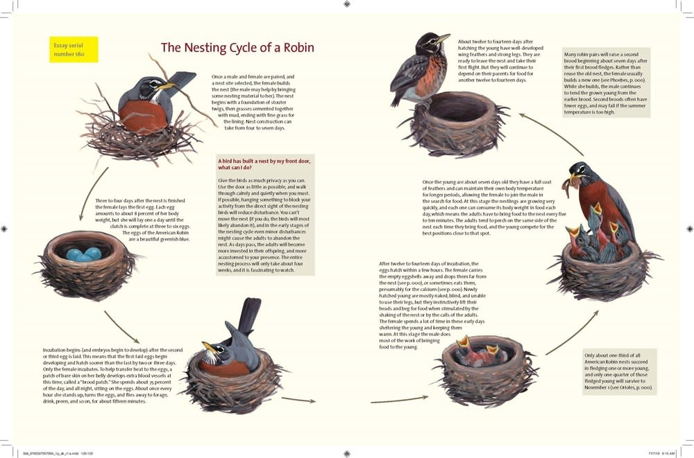 Knopf What It's Like to Be a Bird: ...What Birds Are Doing, and Why
