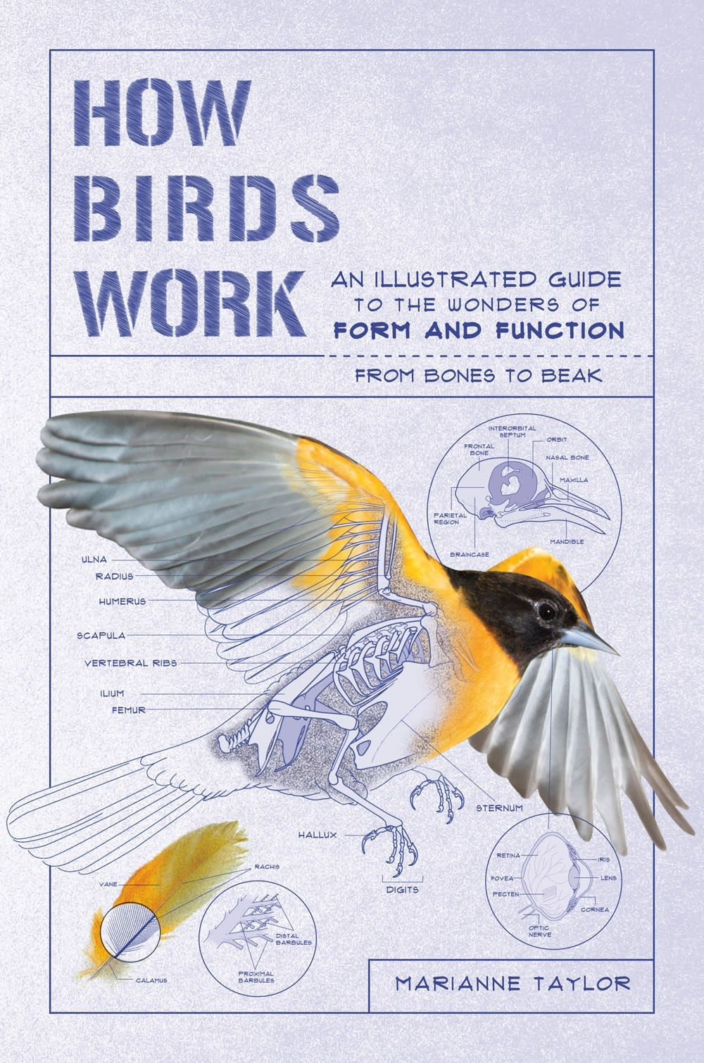The Experiment How Birds Work: ...Form and Function, from Bones to Beak