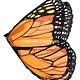 Orange Monarch Butterfly Wings